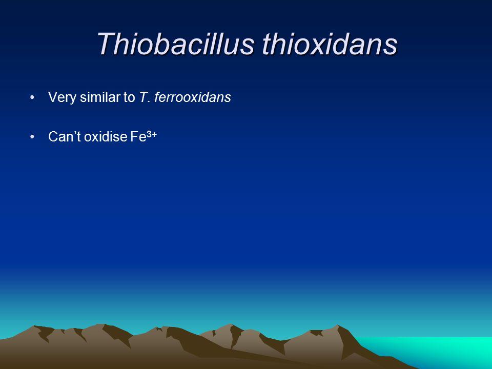 Thiobacillus thioxidans