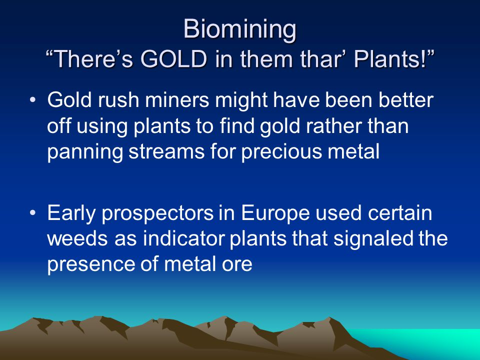 Biomining There's GOLD in them thar' Plants!