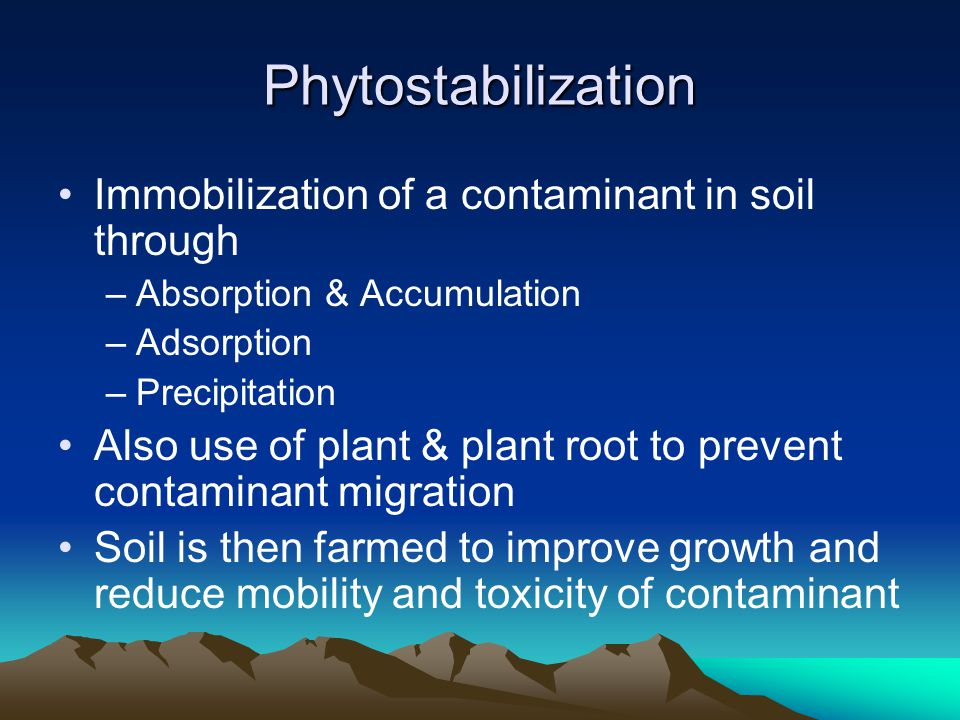 Phytostabilization Immobilization of a contaminant in soil through