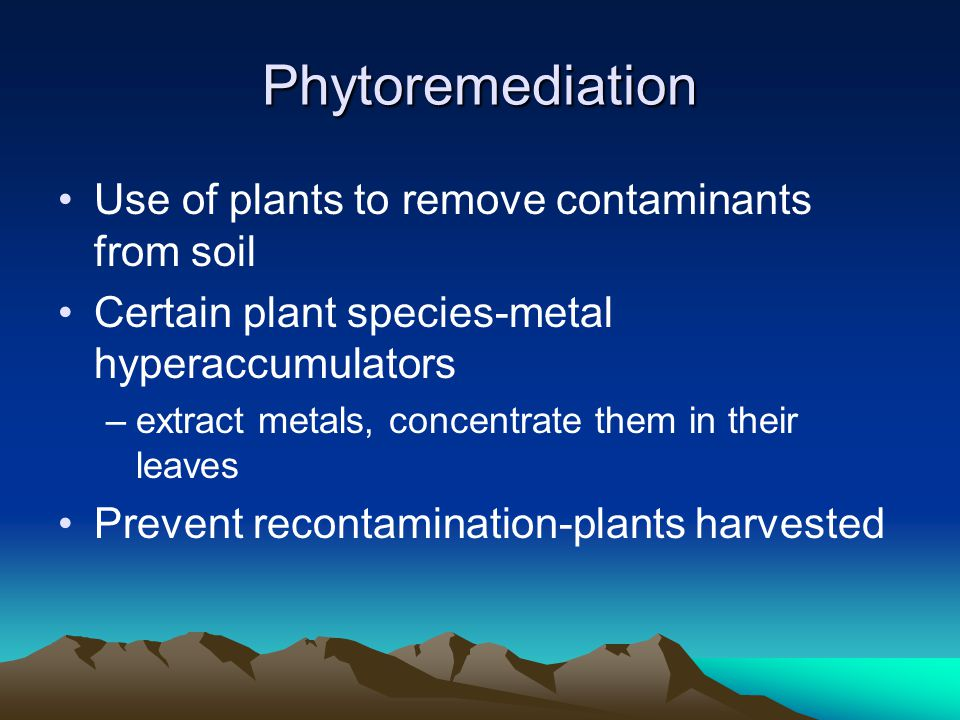 Phytoremediation Use of plants to remove contaminants from soil