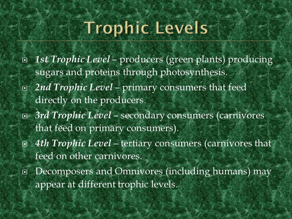 Trophic Levels 1st Trophic Level – producers (green plants) producing sugars and proteins through photosynthesis.