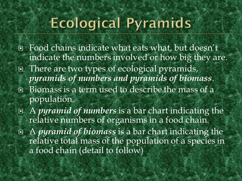 Ecological Pyramids Food chains indicate what eats what, but doesn't indicate the numbers involved or how big they are.