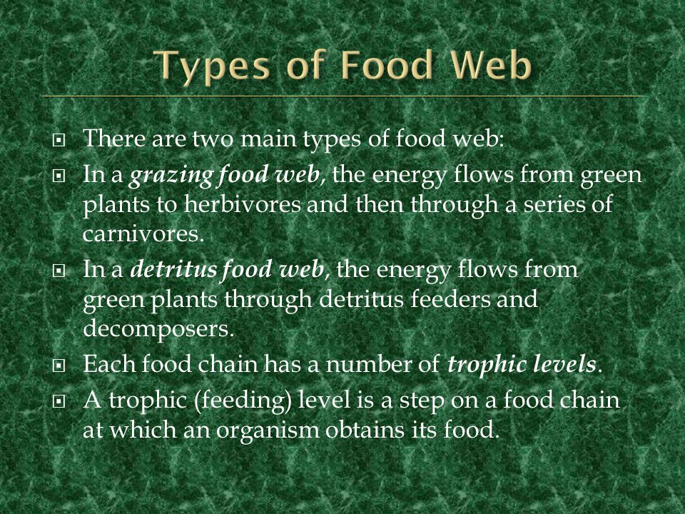 Types of Food Web There are two main types of food web: