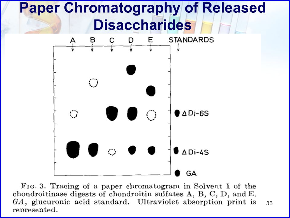 Paper Chromatography of Released Disaccharides