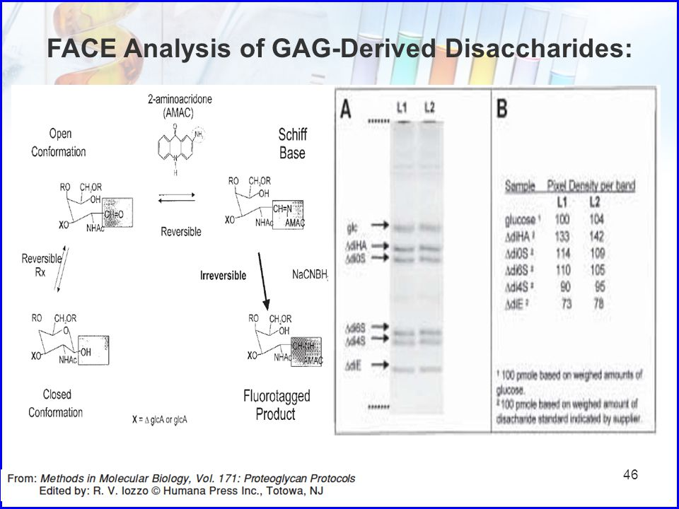 FACE Analysis of GAG-Derived Disaccharides: