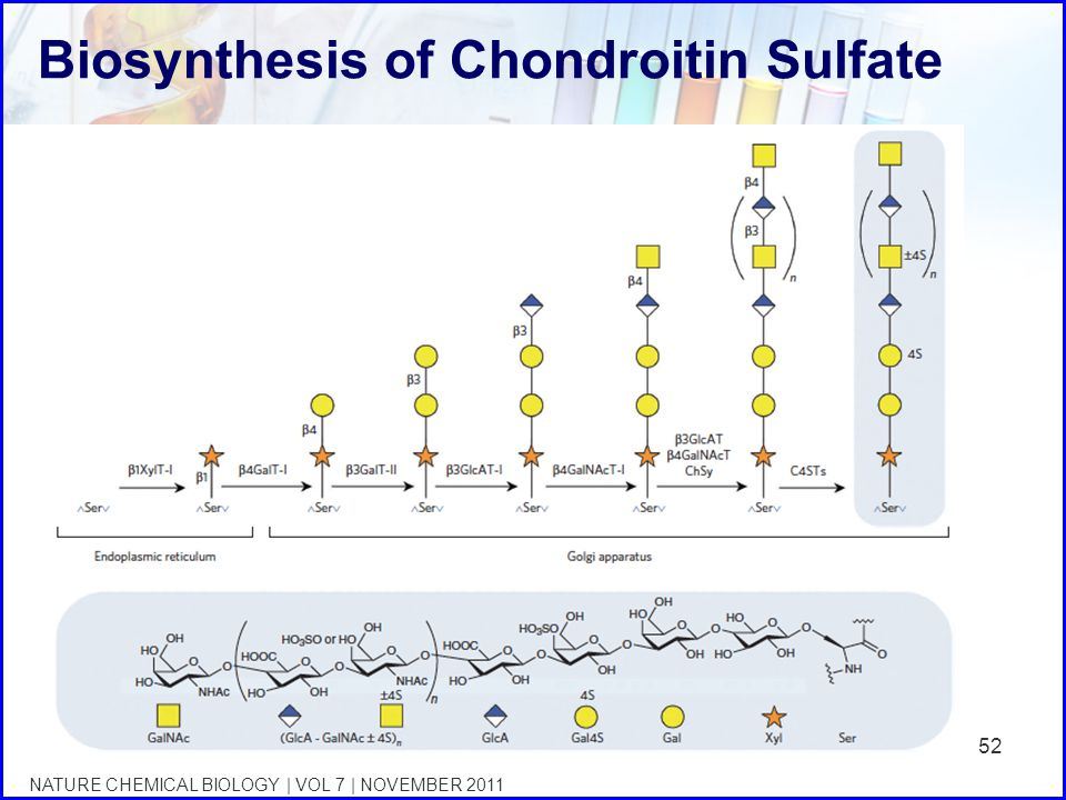 Biosynthesis of Chondroitin Sulfate