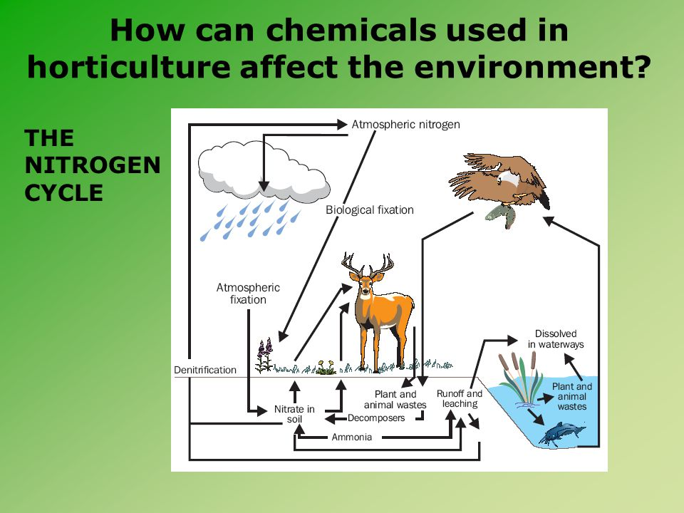 How can chemicals used in horticulture affect the environment