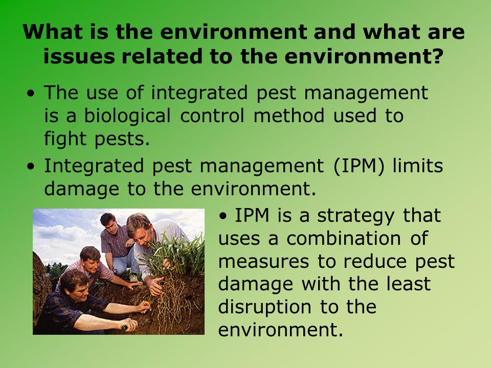 What is the environment and what are issues related to the environment