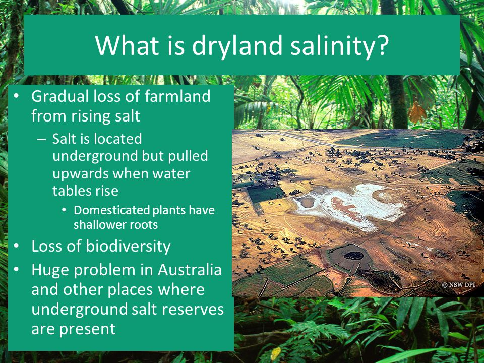 What is dryland salinity