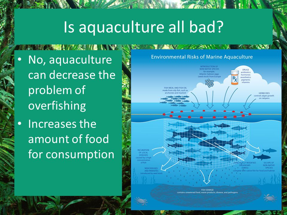 Is aquaculture all bad. No, aquaculture can decrease the problem of overfishing.
