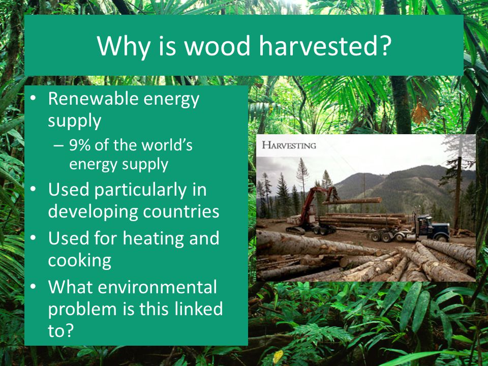 Why is wood harvested Renewable energy supply