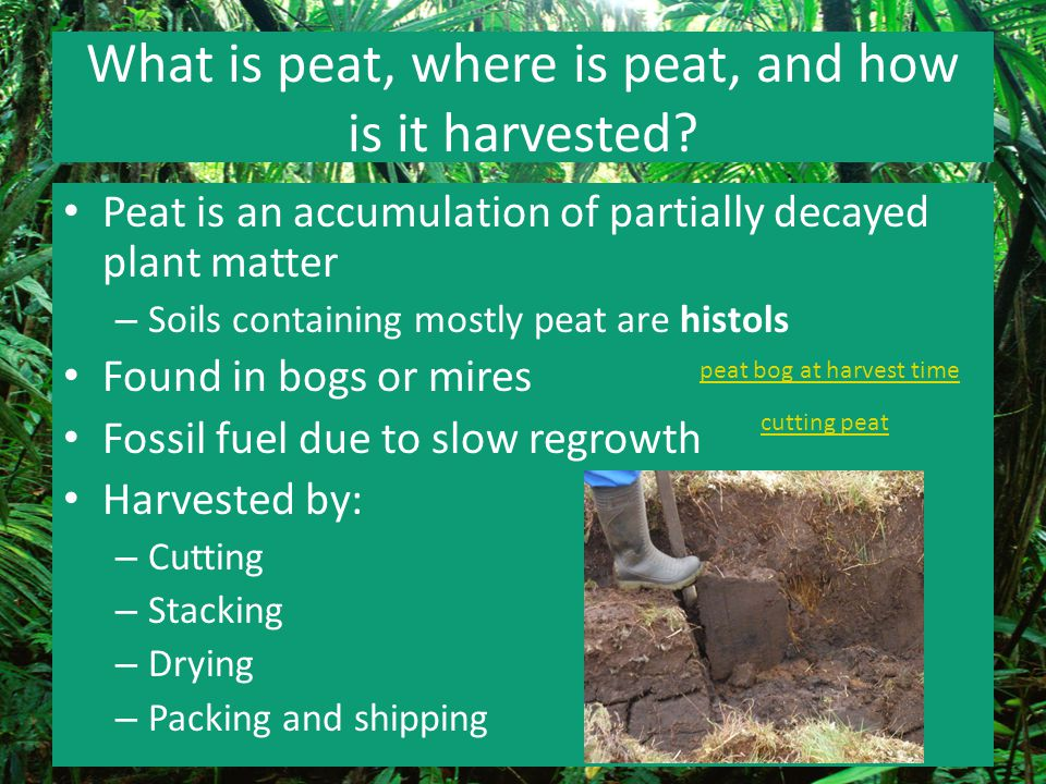 What is peat, where is peat, and how is it harvested