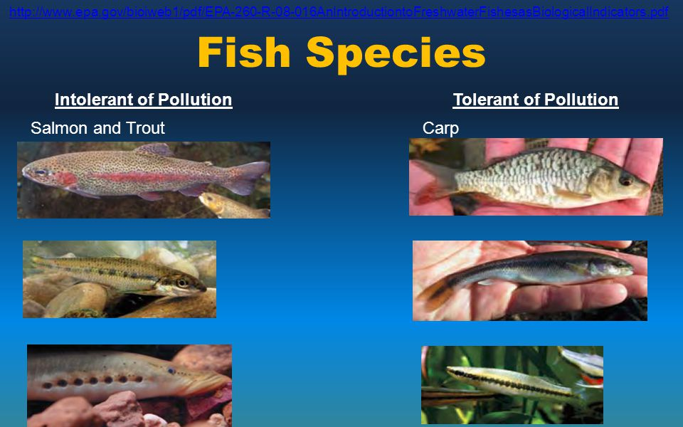 Fish Species Intolerant of Pollution Tolerant of Pollution