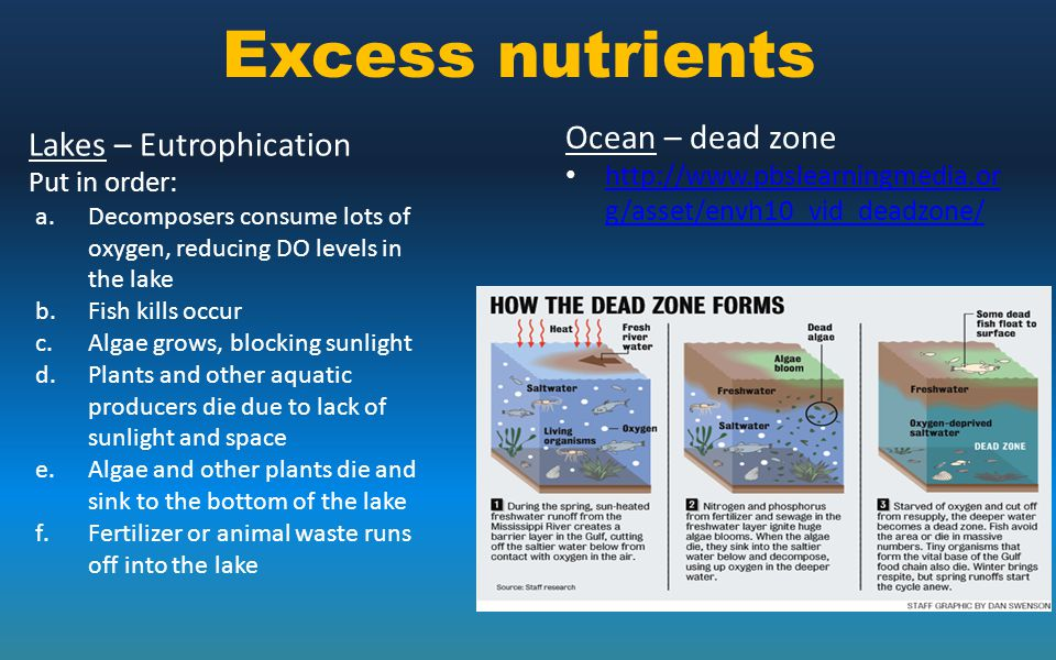 Excess nutrients Ocean – dead zone Lakes – Eutrophication