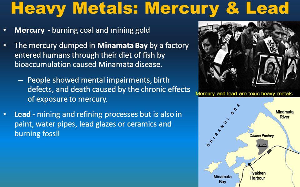 Heavy Metals: Mercury & Lead