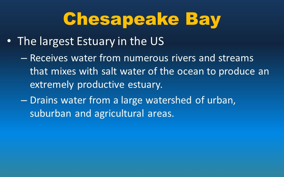 Chesapeake Bay The largest Estuary in the US