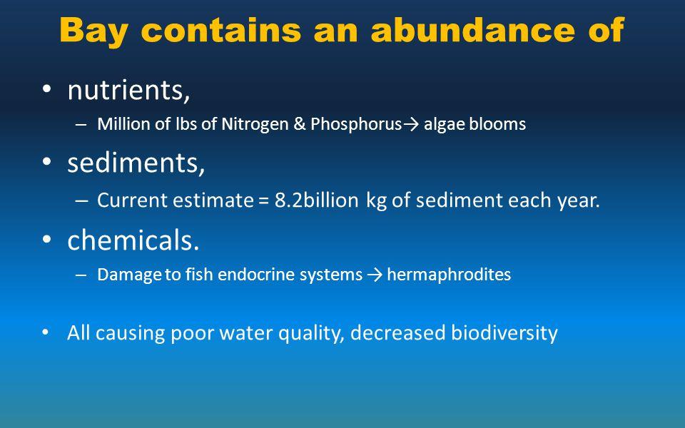 Bay contains an abundance of