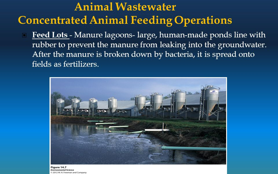 Animal Wastewater Concentrated Animal Feeding Operations