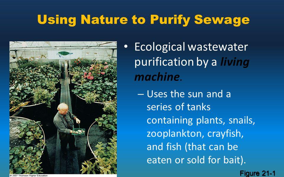 Using Nature to Purify Sewage