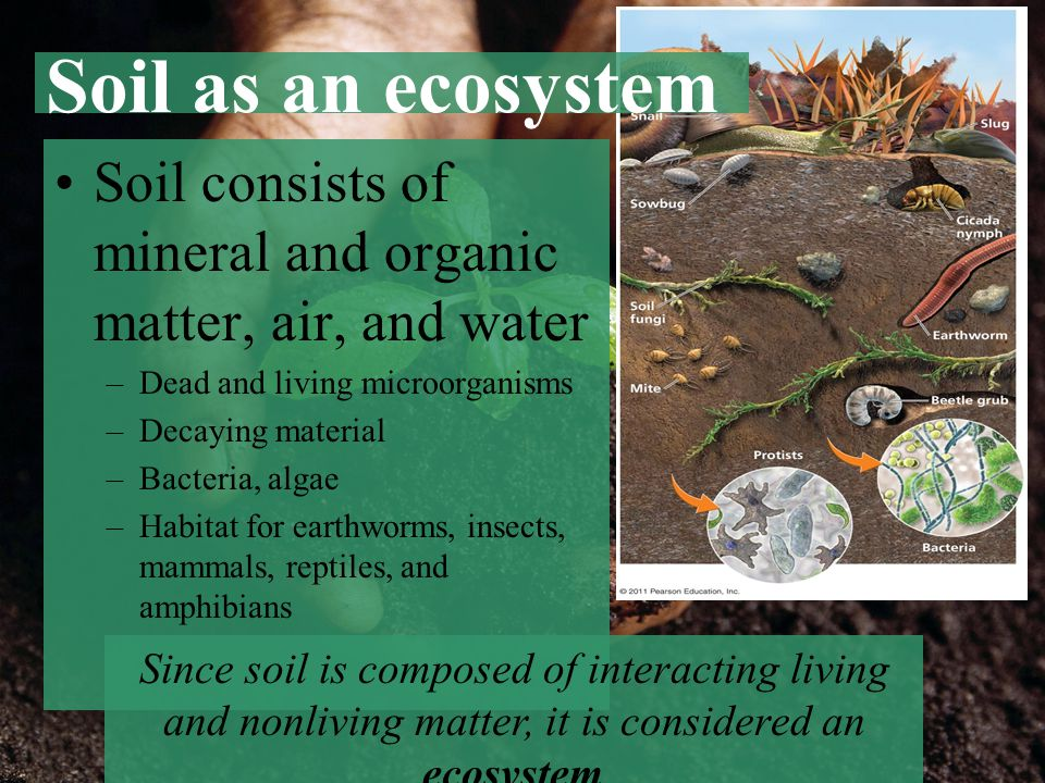 Soil as an ecosystem Soil consists of mineral and organic matter, air, and water. Dead and living microorganisms.
