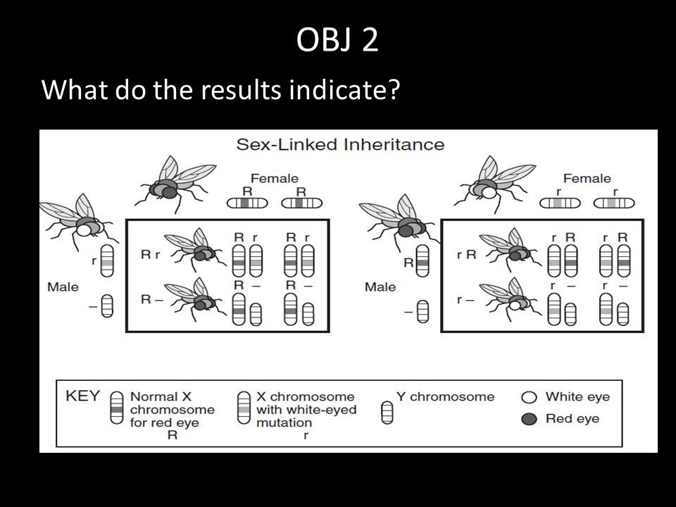 OBJ 2 What do the results indicate