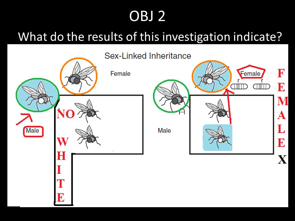 OBJ 2 What do the results of this investigation indicate