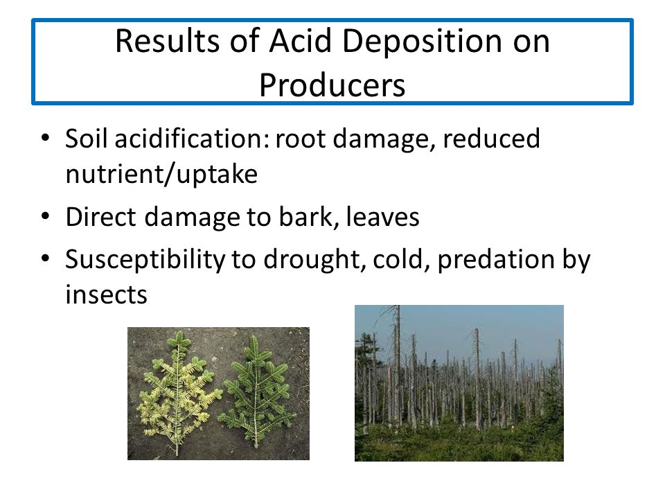 Results of Acid Deposition on Producers