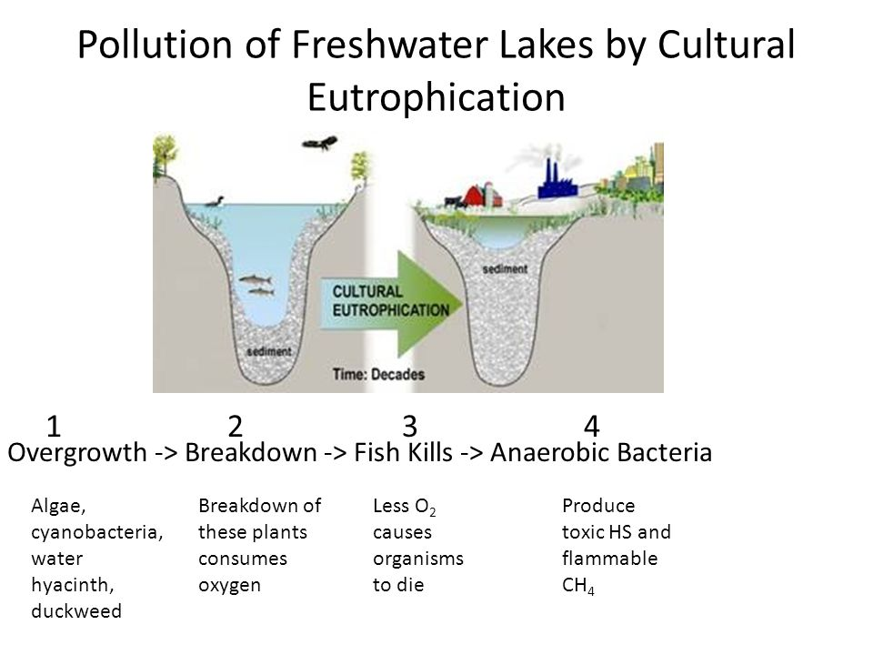 Pollution of Freshwater Lakes by Cultural Eutrophication