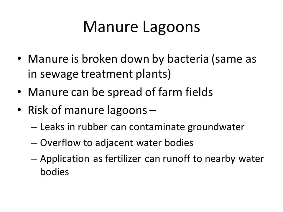 Manure Lagoons Manure is broken down by bacteria (same as in sewage treatment plants) Manure can be spread of farm fields.