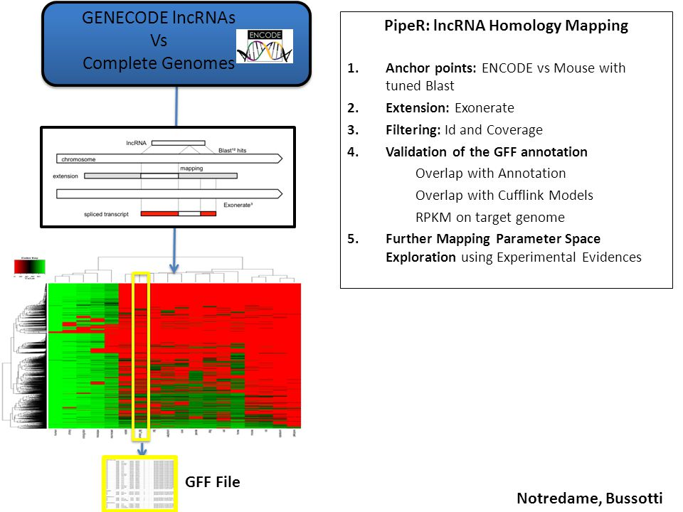 PipeR: lncRNA Homology Mapping