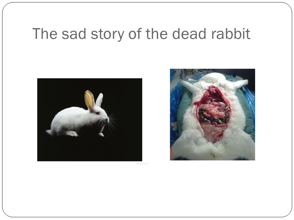 The sad story of the dead rabbit