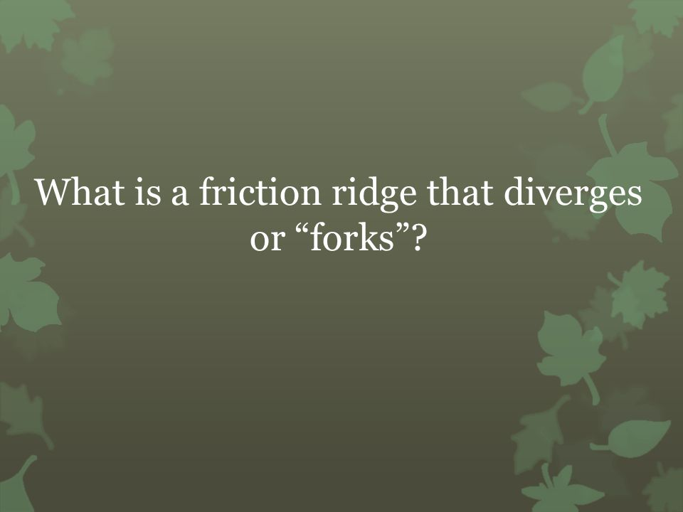 What is a friction ridge that diverges or forks