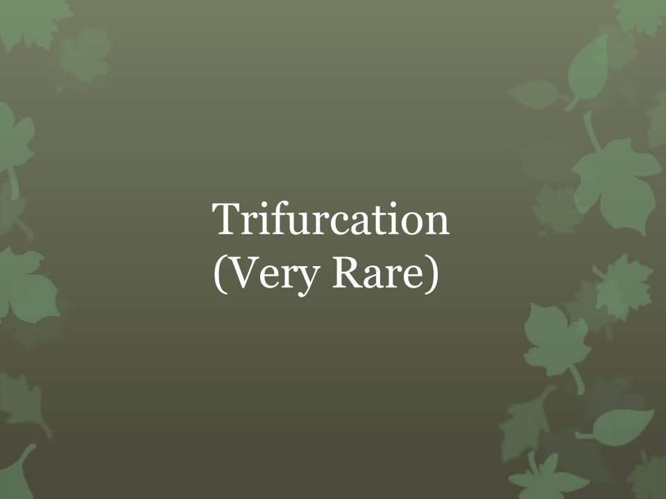 Trifurcation (Very Rare)