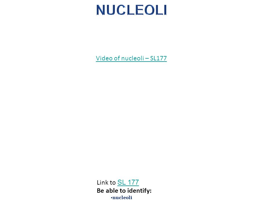 NUCLEOLI Video of nucleoli – SL177 Link to SL 177 Be able to identify: