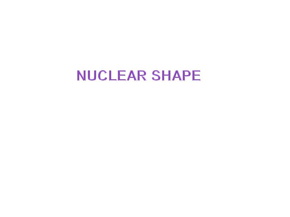 NUCLEAR SHAPE