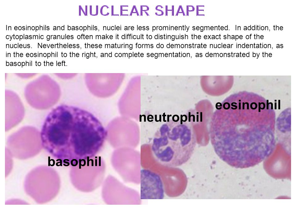 Hematopoiesis Overview - ppt video online download