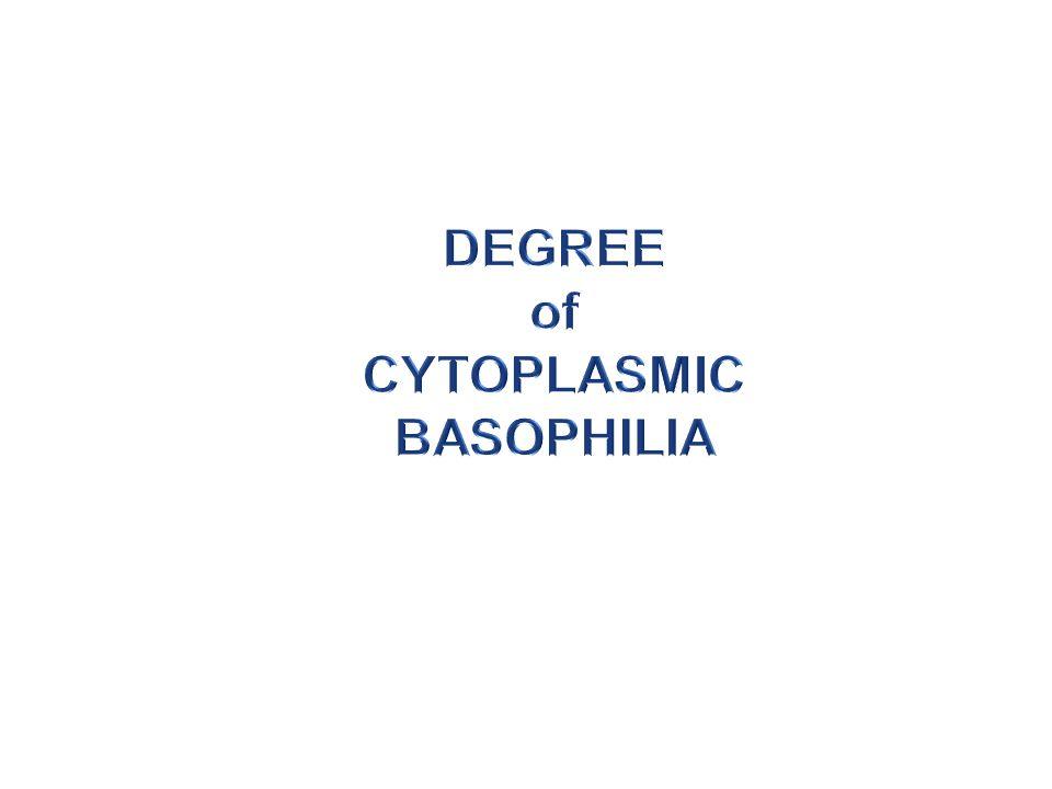 CYTOPLASMIC BASOPHILIA