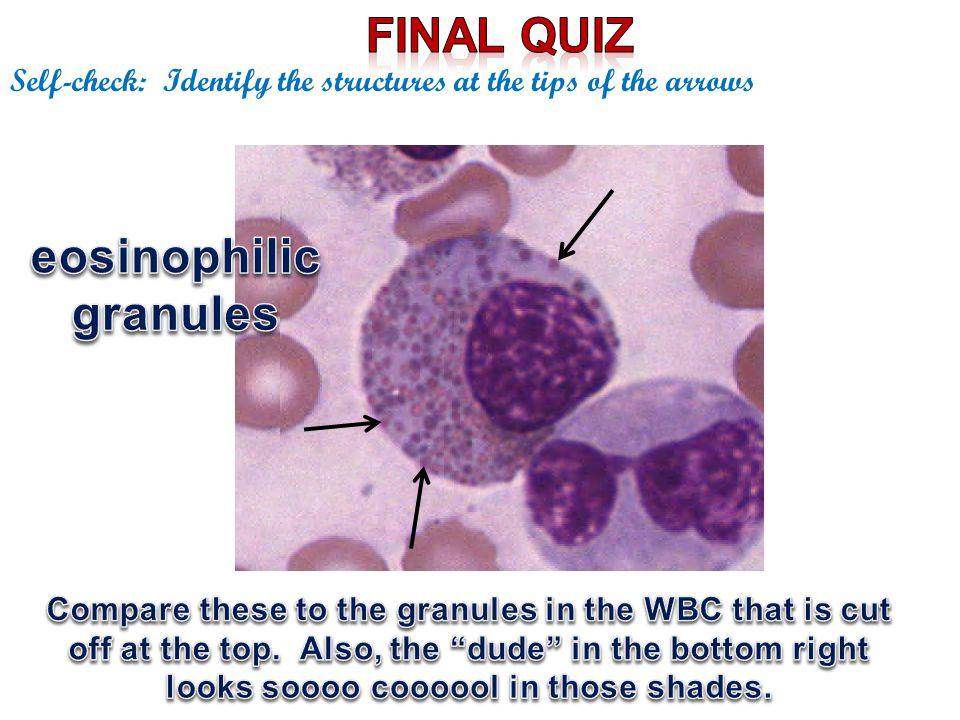 eosinophilicgranules