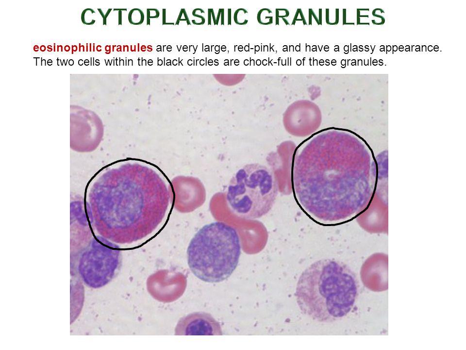 CYTOPLASMIC GRANULES