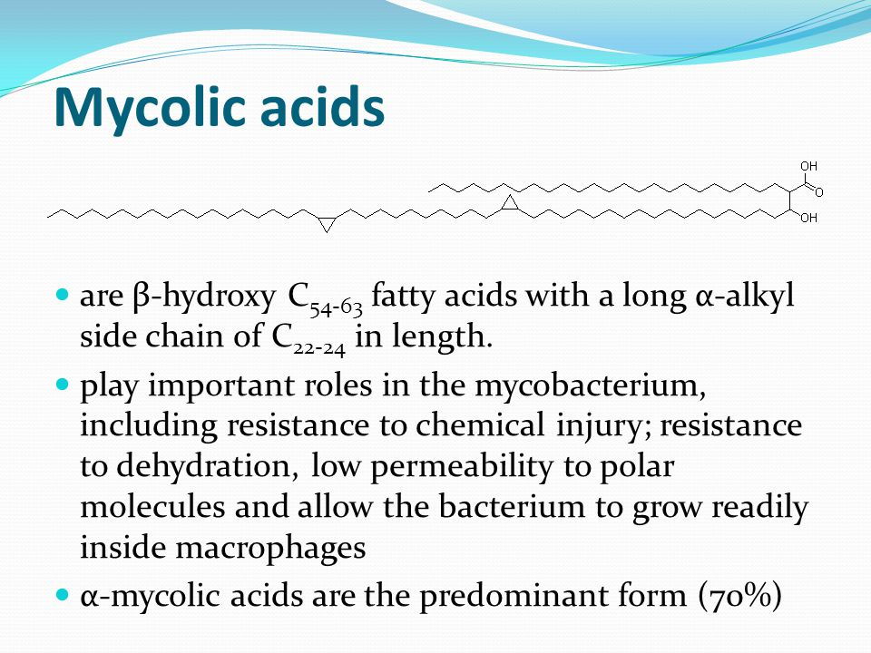 Mycolic acids are β-hydroxy C54-63 fatty acids with a long α-alkyl side chain of C22-24 in length.