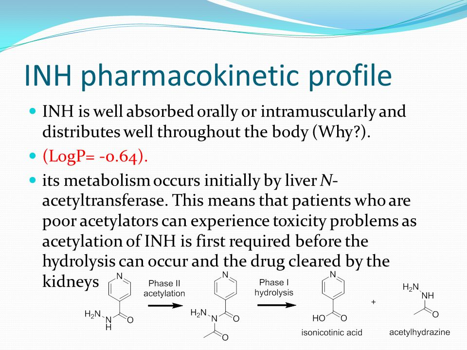 INH pharmacokinetic profile
