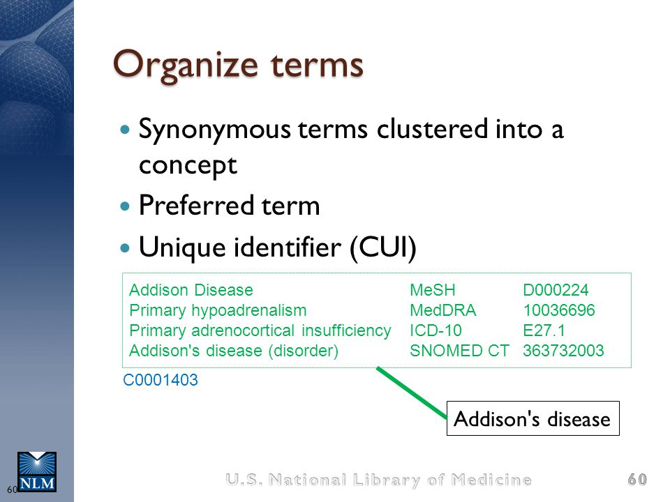 Organize terms Synonymous terms clustered into a concept
