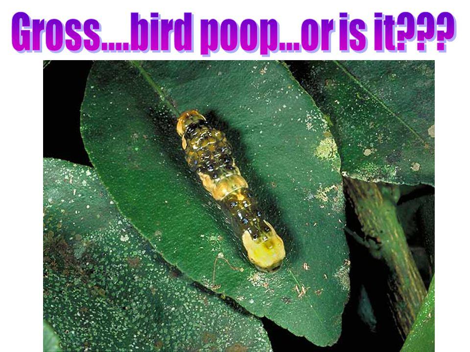 Gross....bird poop...or is it