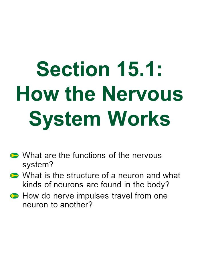 Section 15.1: How the Nervous System Works