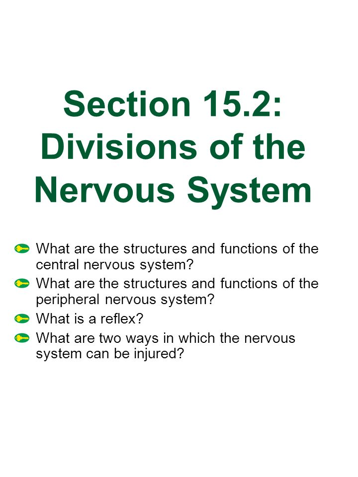 Section 15.2: Divisions of the Nervous System