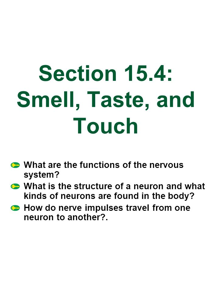 Section 15.4: Smell, Taste, and Touch