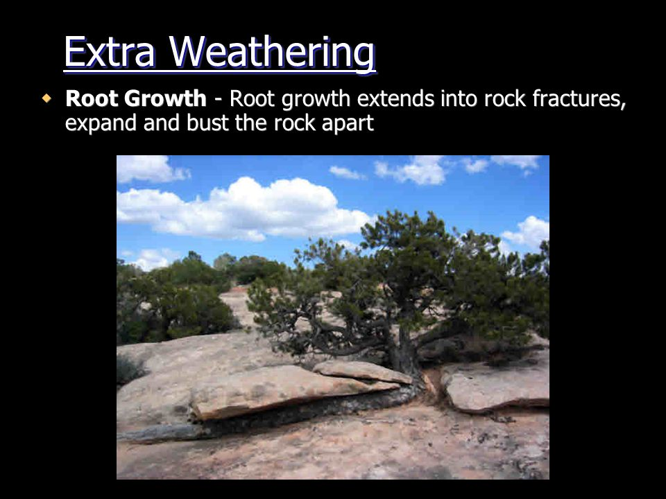 Extra Weathering Root Growth - Root growth extends into rock fractures, expand and bust the rock apart.
