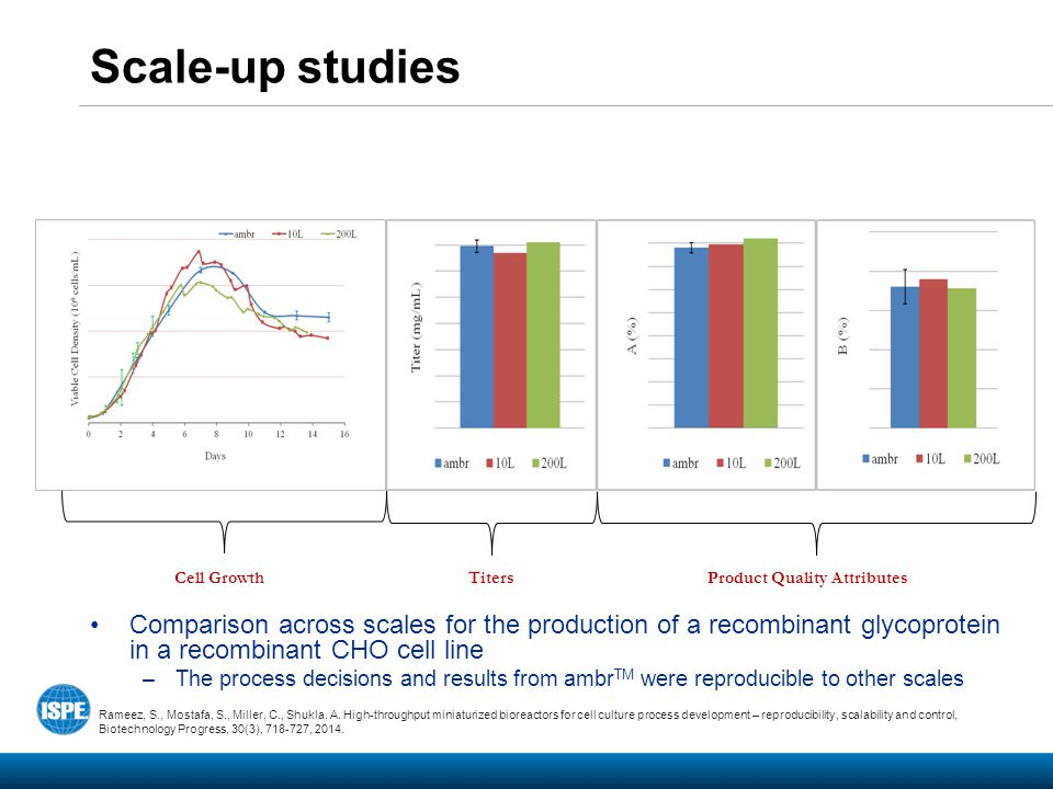 Scale-up studies Comparison across scales for the production of a recombinant glycoprotein in a recombinant CHO cell line.