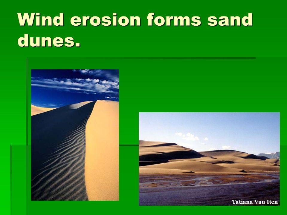 Wind erosion forms sand dunes.