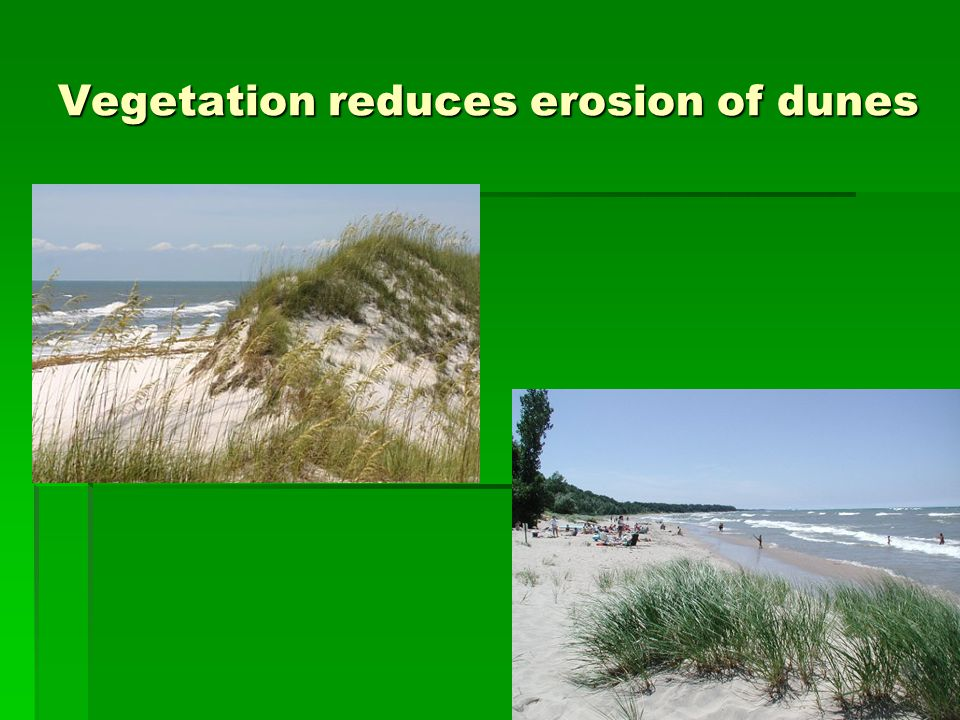 Vegetation reduces erosion of dunes